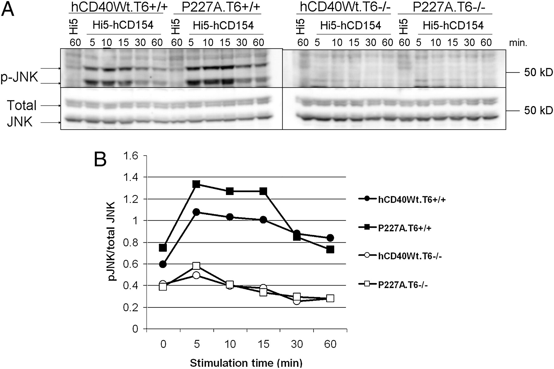 Differential TRAF3 Utilization by a Variant Human CD40 Receptor with