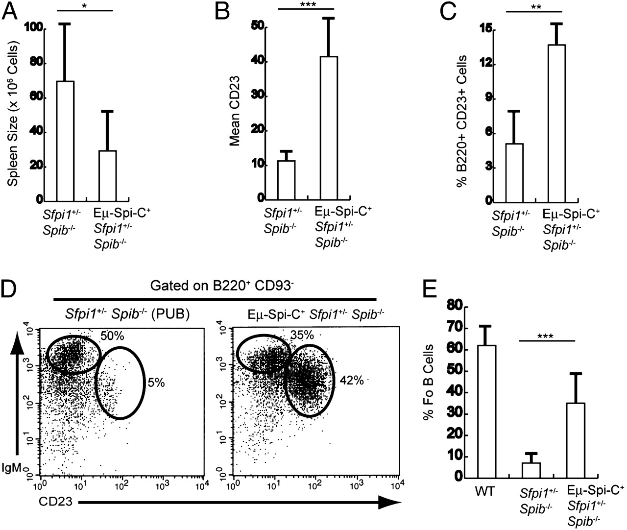Regulation of Follicular B Cell Differentiation by the Related E26 on
