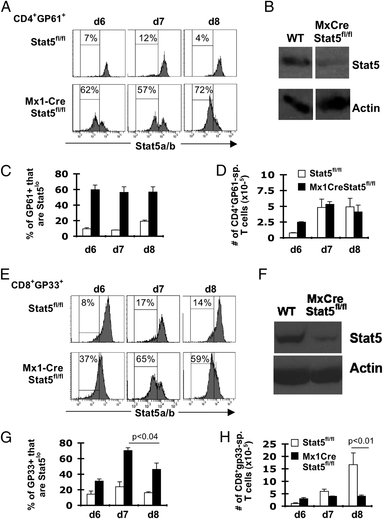 STAT5 Is Critical To Maintain Effector CD8+ T Cell Responses