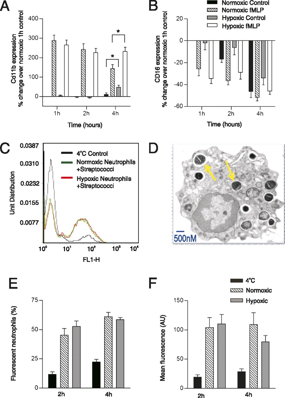 Hypoxia Selectively Inhibits Respiratory Burst Activity and