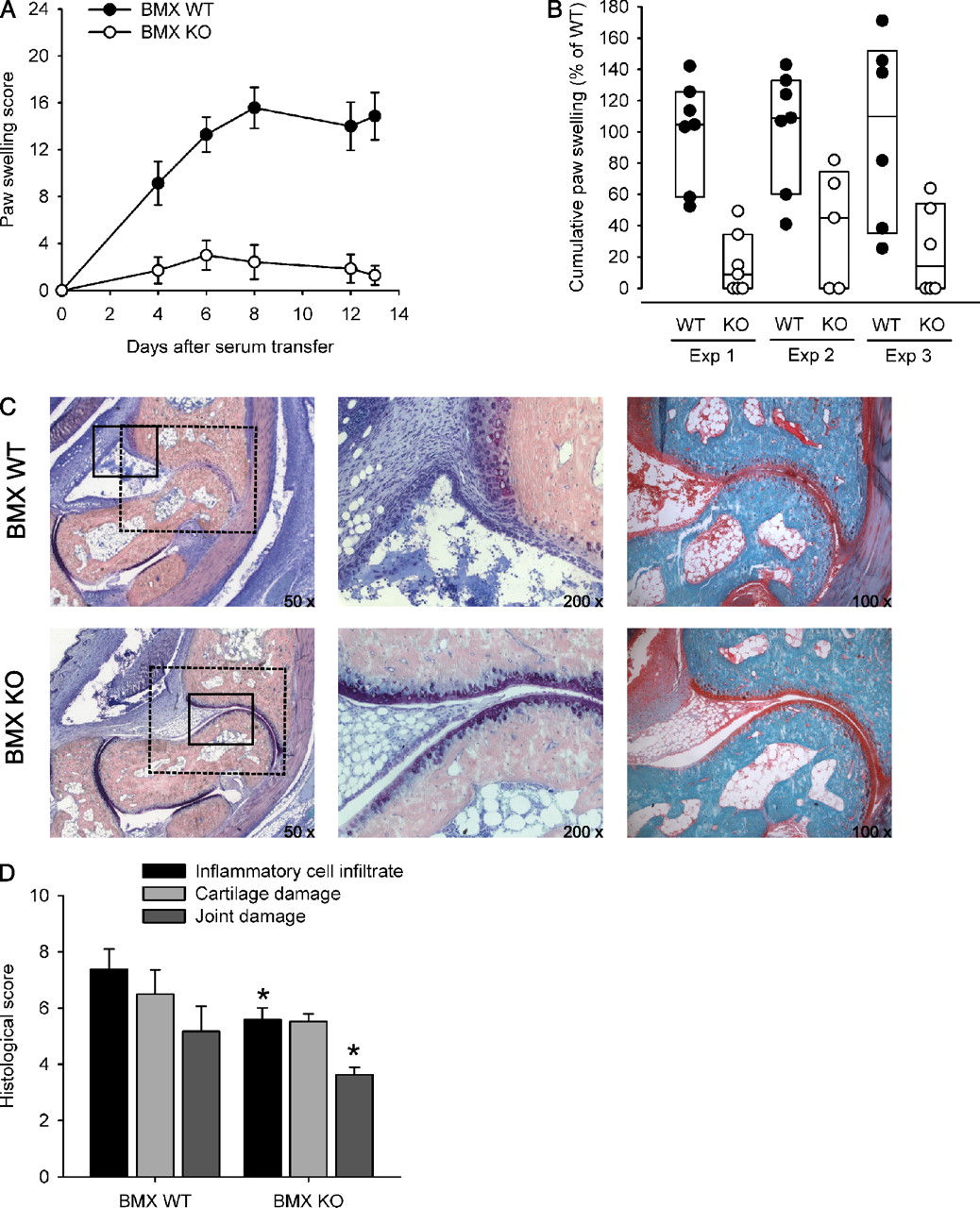 The Tyrosine Kinase Bmx Is An Essential Mediator Of Inflammatory Mouse Double Lens Micropack Download Figure