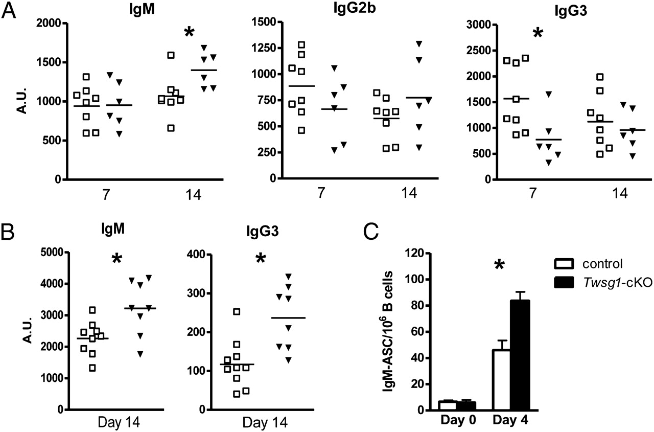 Involvement of Twisted Gastrulation in T Cell-Independent