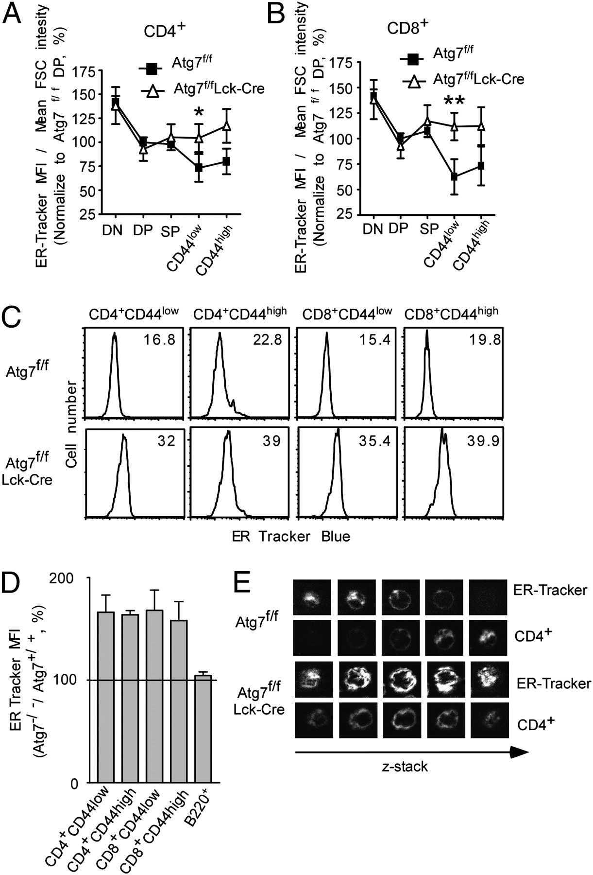 Autophagy Regulates Endoplasmic Reticulum Homeostasis And Calcium Lm 317 T Related Keywords Suggestions Long Tail Download Figure