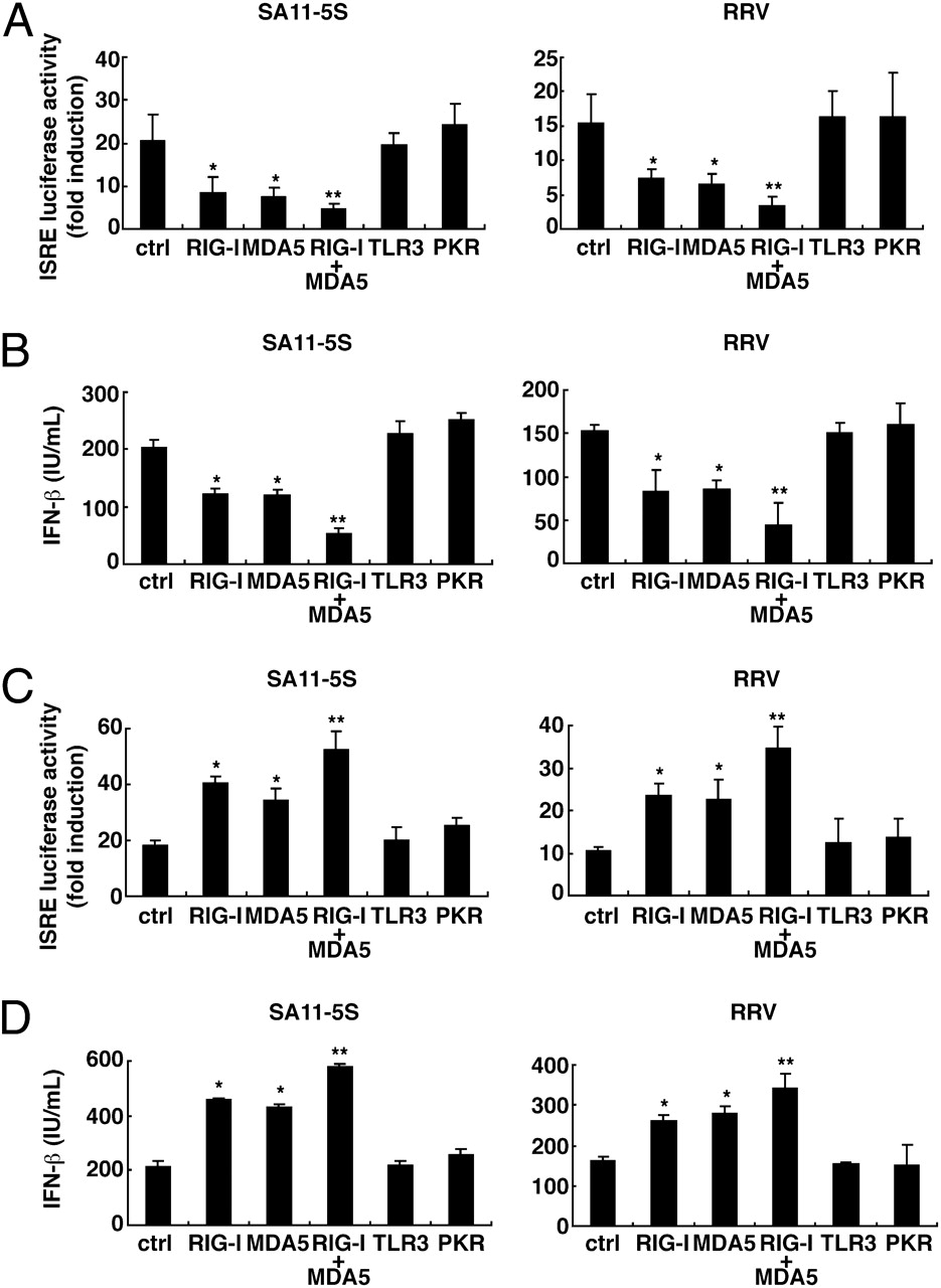 Rig Imda5mavs Are Required To Signal A Protective Ifn Response In