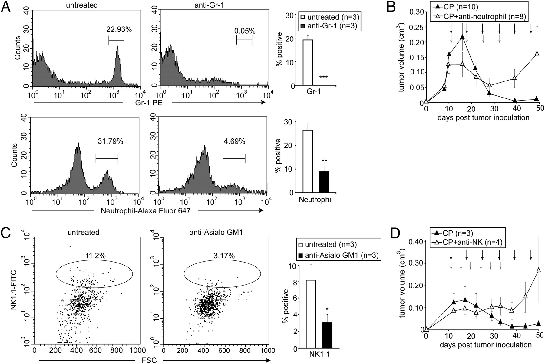 DNA Alkylating Therapy Induces Tumor Regression Through An HMGB1