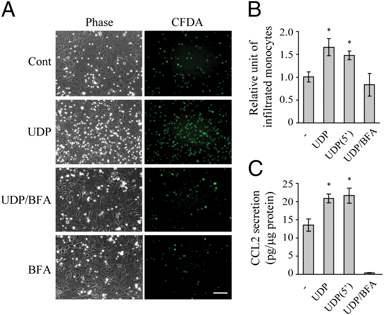Uridine 5′-Diphosphate Induces Chemokine Expression in Microglia and