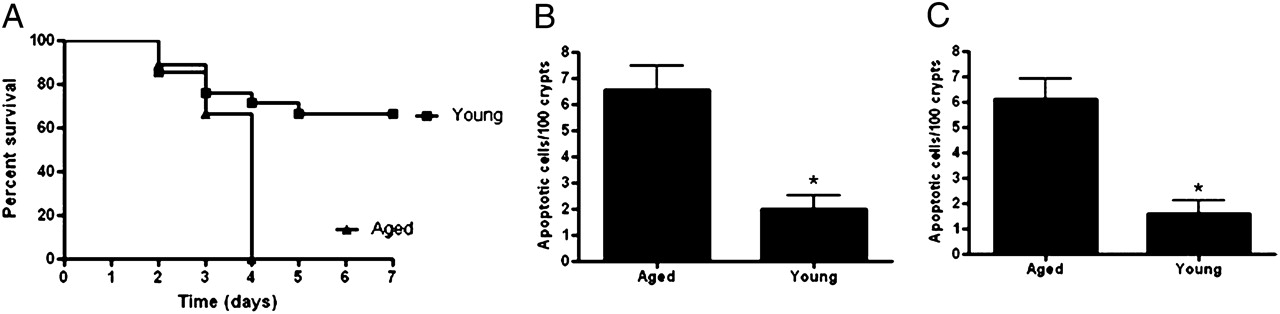 The Role of Heat Shock Protein 70 in Mediating Age-Dependent