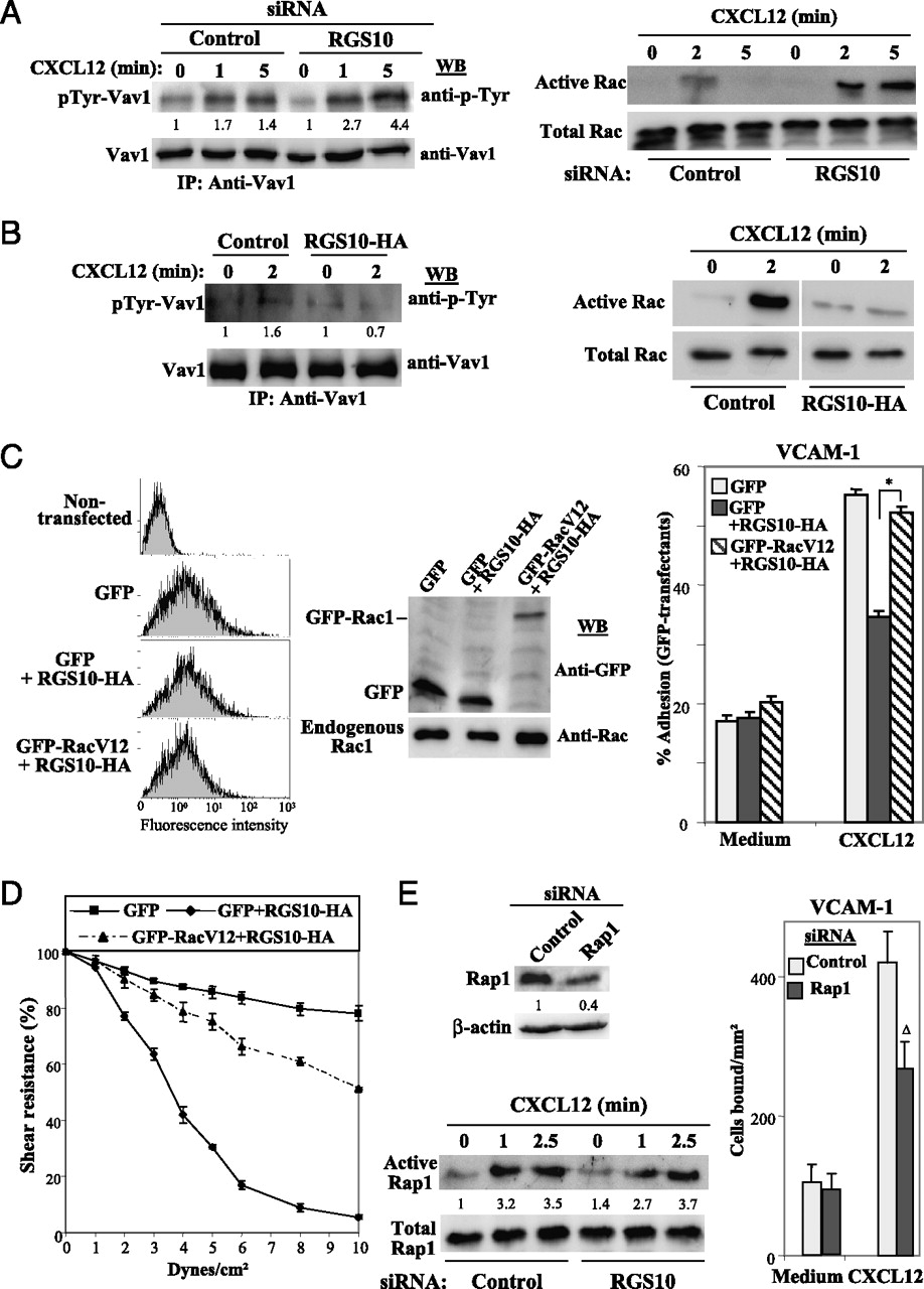 RGS10 Restricts Upregulation by Chemokines of T Cell