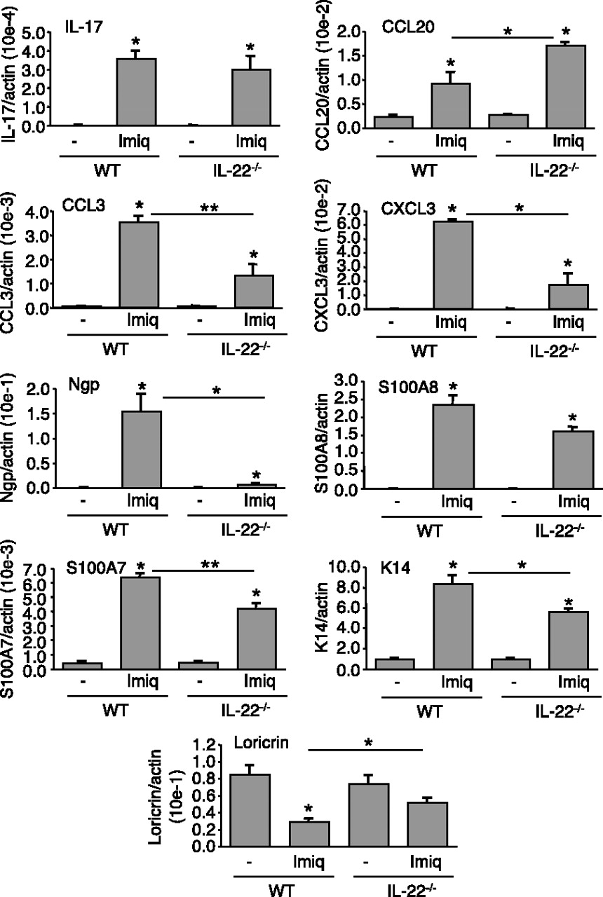 Il 22 Is Required For Imiquimod Induced Psoriasiform Skin