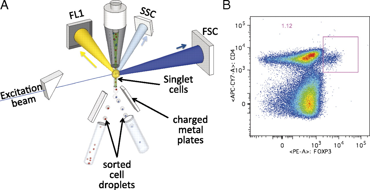 Translational Applications Of Flow Cytometry In Clinical Practice Follow The Colors On Schematic And Description Text Download Figure