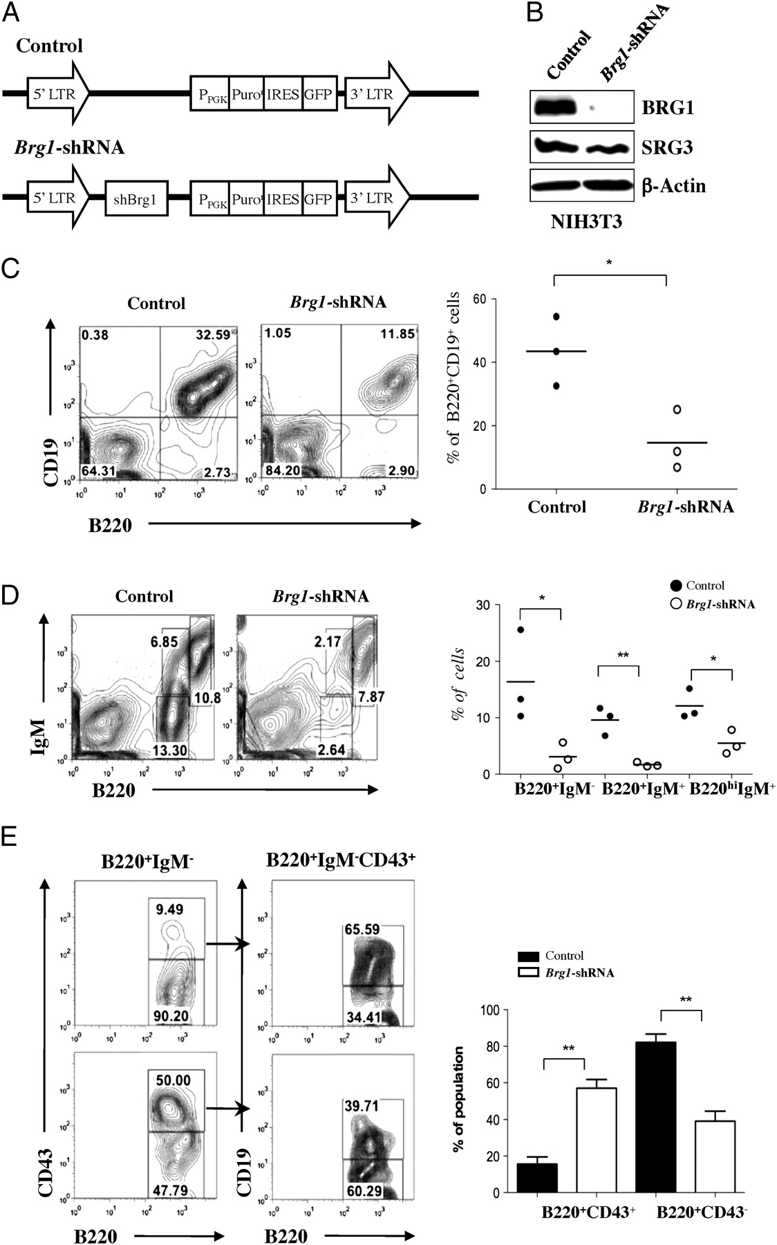 The SWI/SNF-like BAF Complex Is Essential for Early B Cell ...