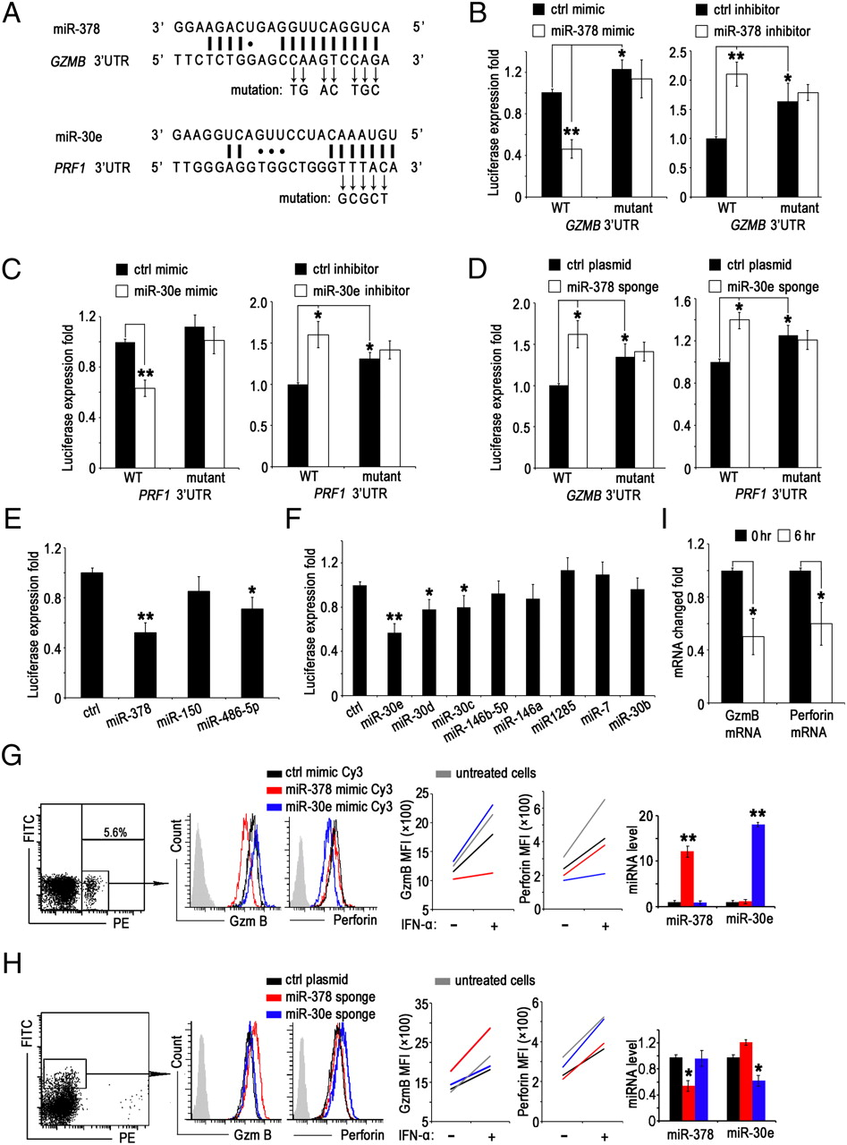 Identification of Resting and Type I IFN-Activated Human NK Cell