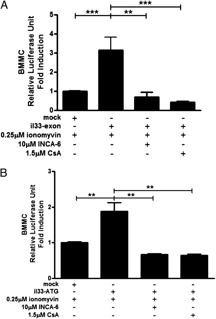 Inducible il 33 expression by mast cells is regulated by a calcium download figure pooptronica Images