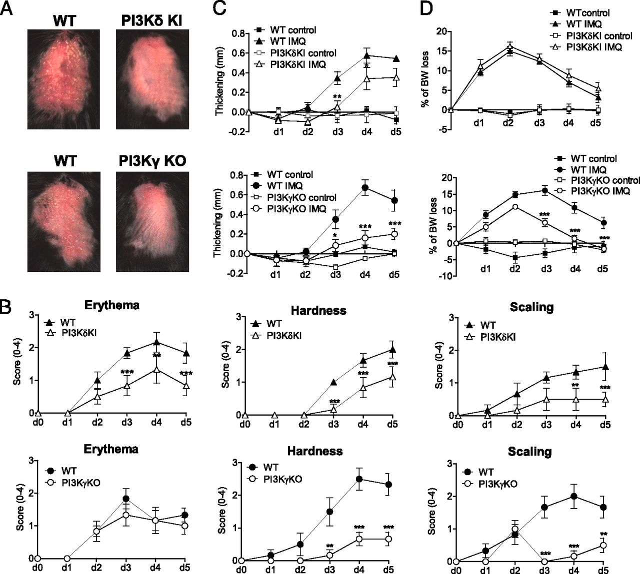 Blockade of Phosphatidylinositol 3-Kinase (PI3K)δ or PI3Kγ Reduces
