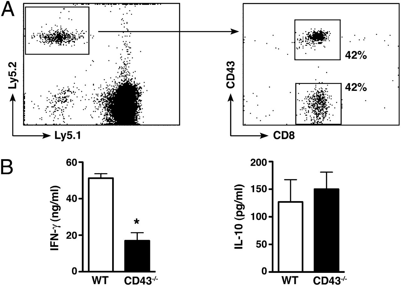 Cd43 Mediated Ifn Production By Cd8 T Cells Promotes Abdominal Lm 317 Related Keywords Suggestions Long Tail Download Figure