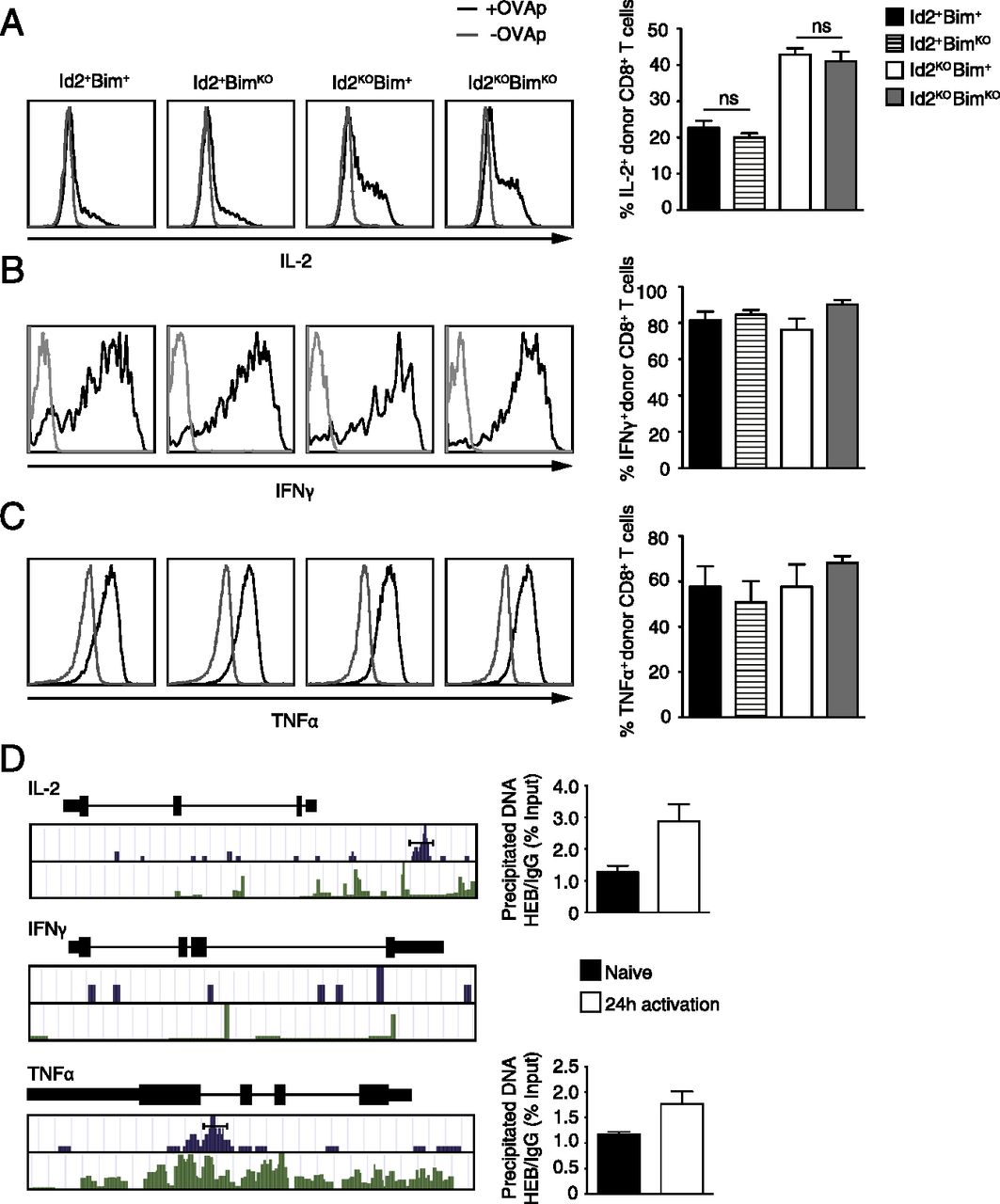 Id2 Influences Differentiation of Killer Cell Lectin-like