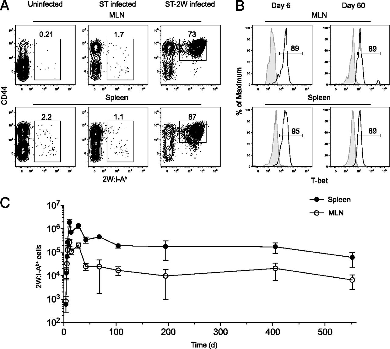 CD4+ T Cell Persistence and Function after Infection Are
