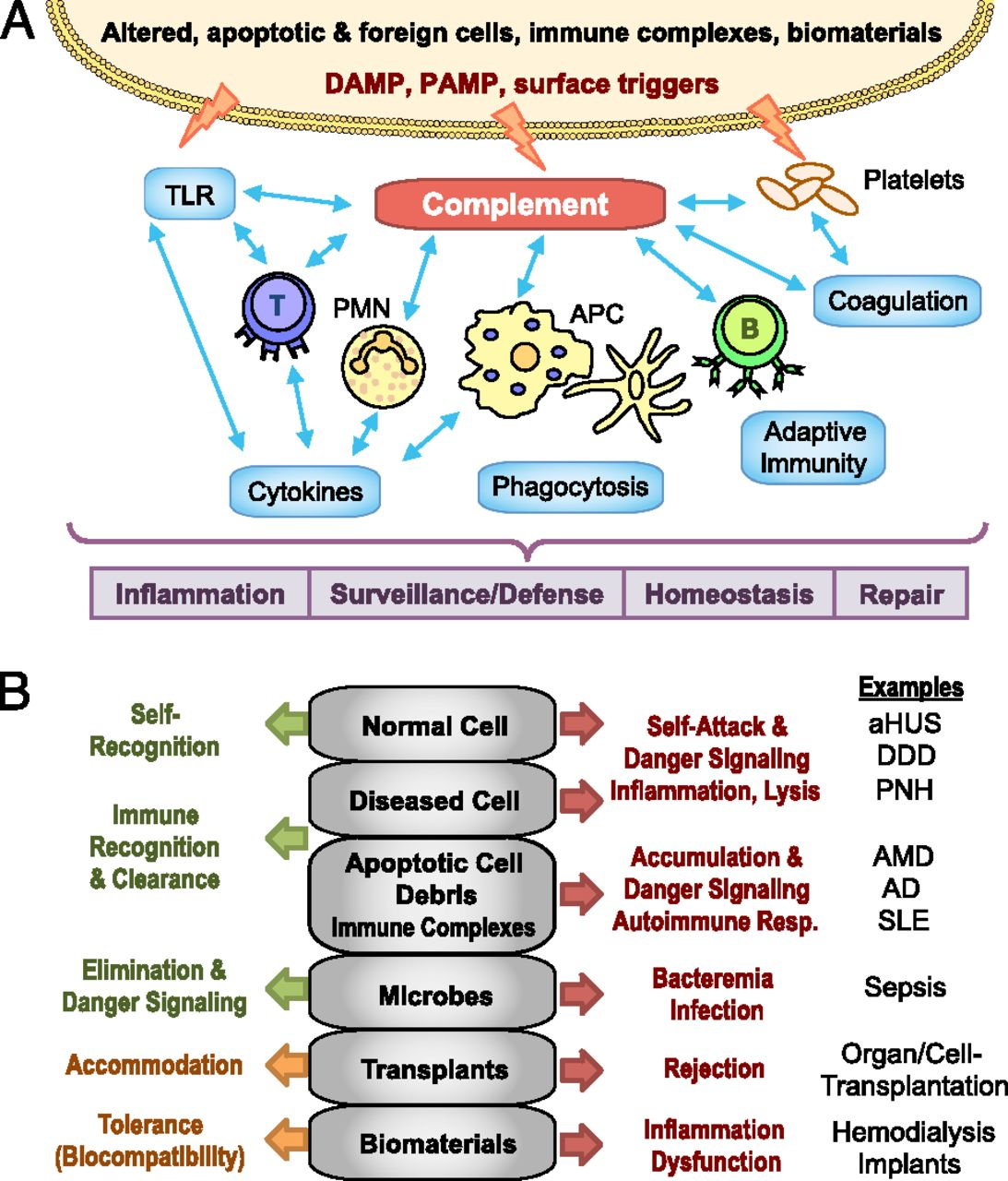 The Complement System Concept Map.Complement In Immune And Inflammatory Disorders Pathophysiological