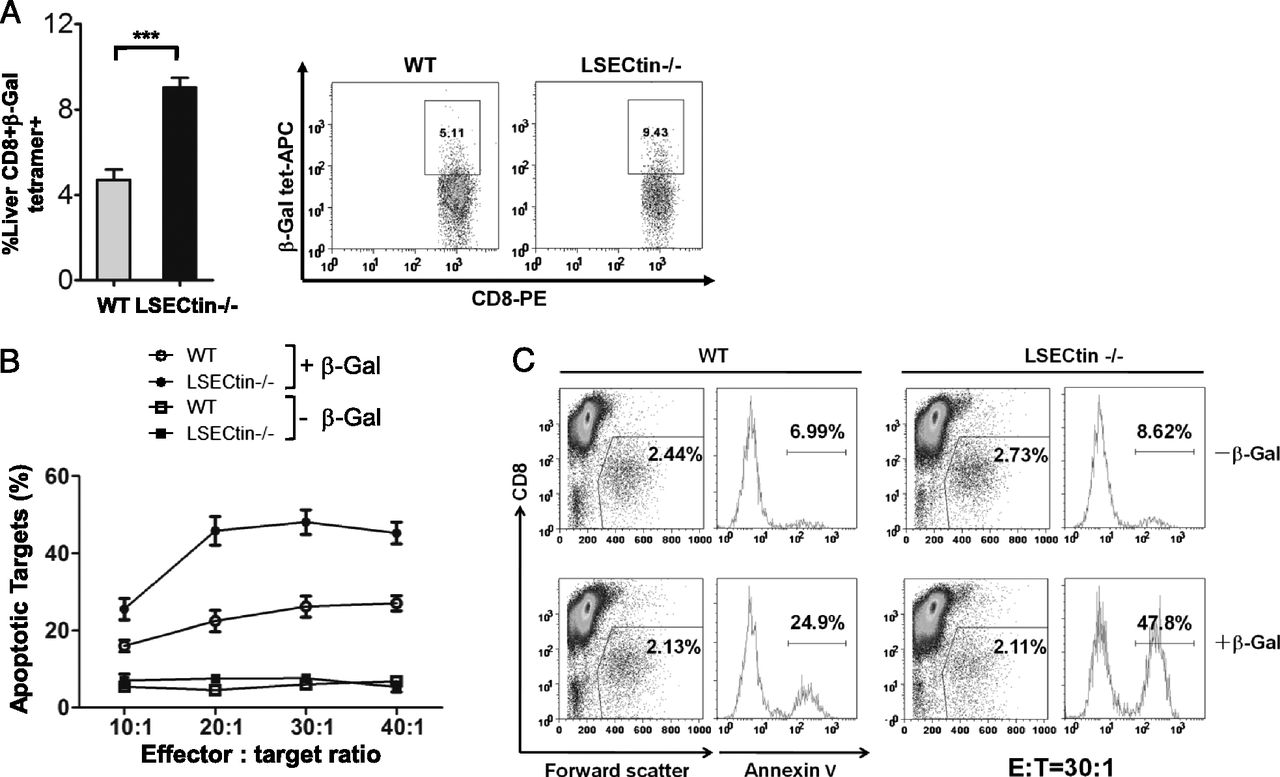 Liver Sinusoidal Endothelial Cell Lectin Inhibits Ctl Dependent