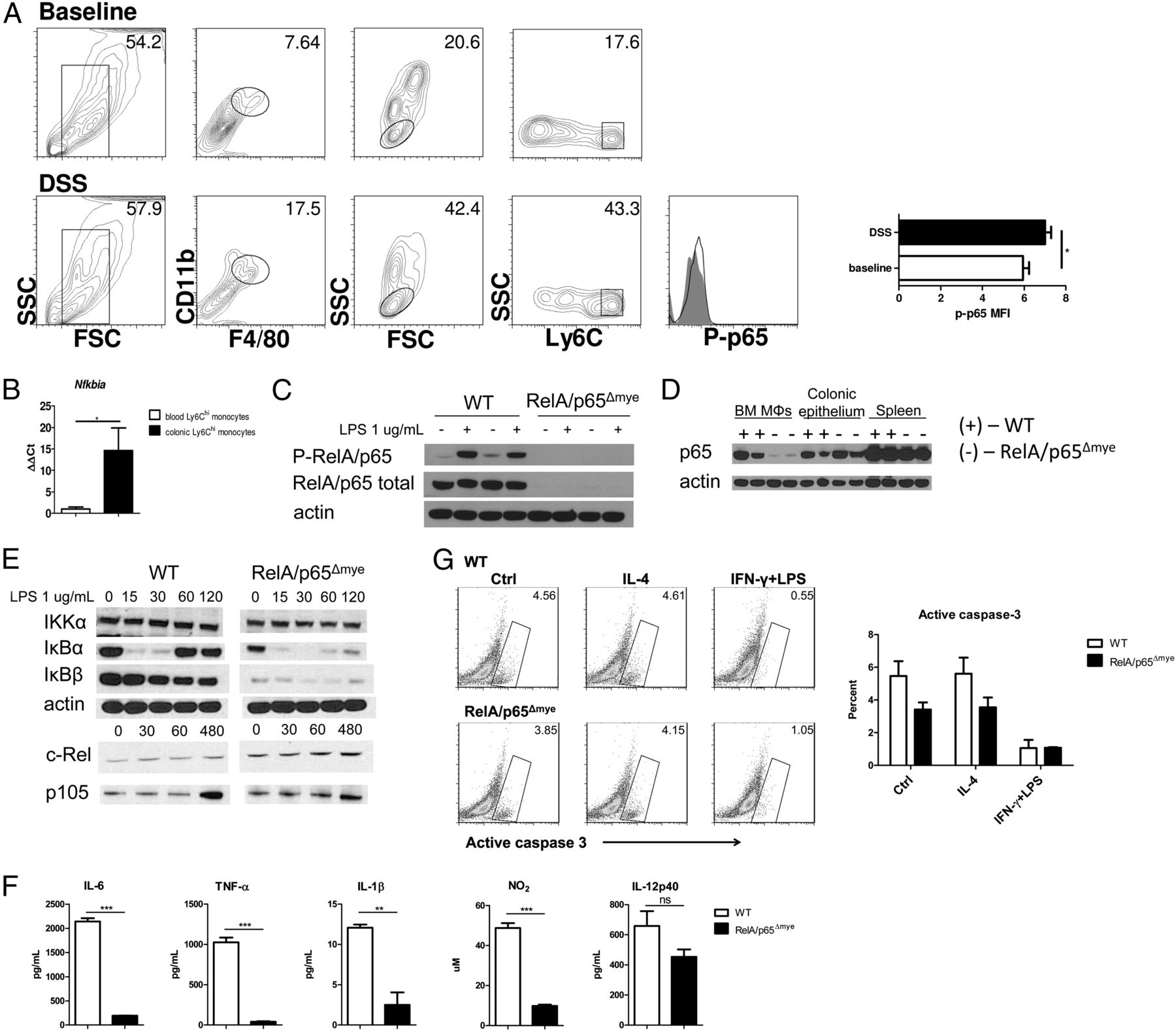 Intestinal CCL11 and Eosinophilic Inflammation Is Regulated by