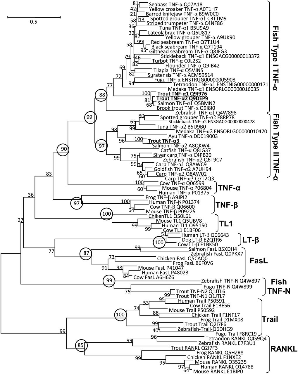 Two Types of TNF-α Exist in Teleost Fish: Phylogeny