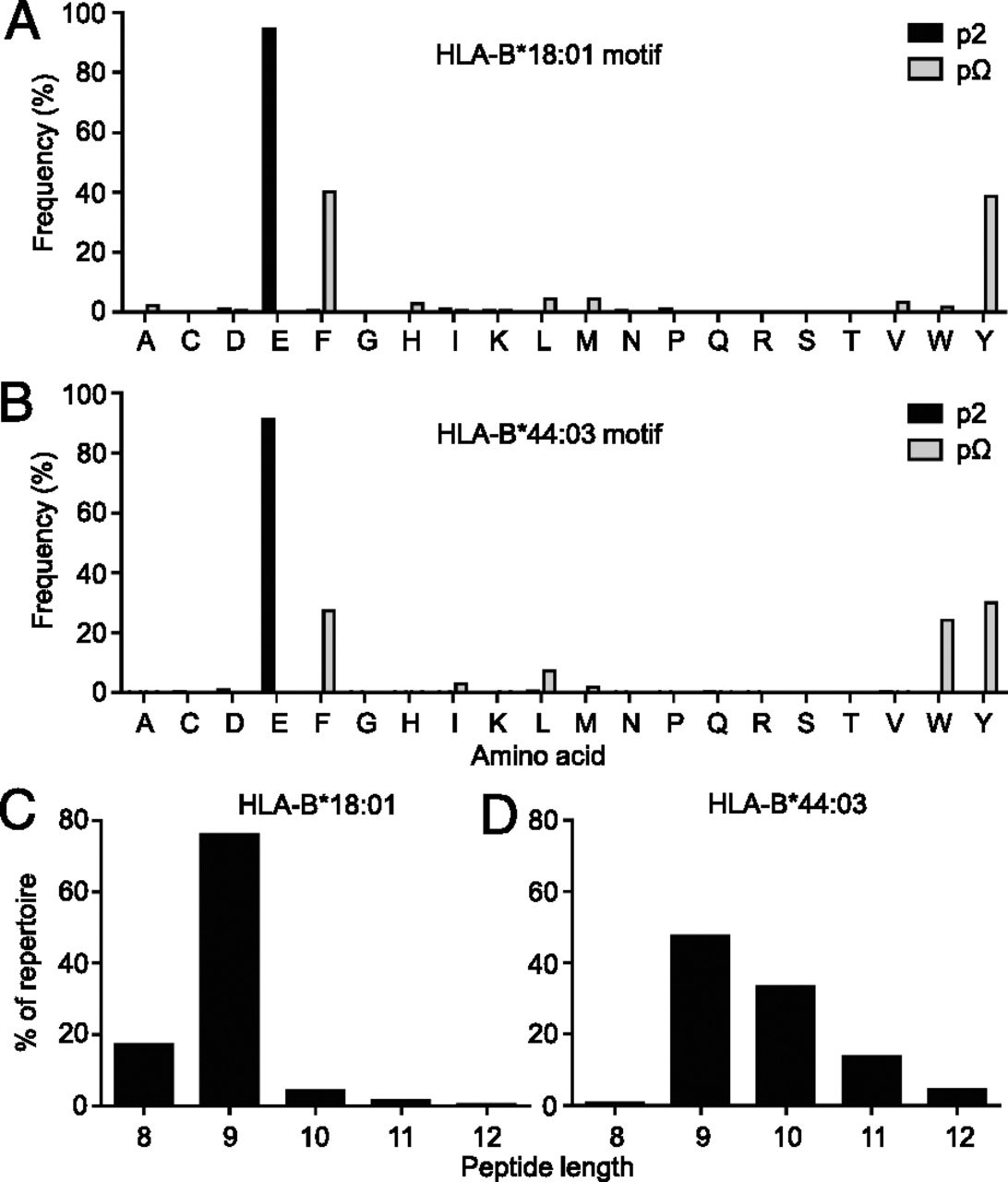 HLA Peptide Length Preferences Control CD8+ T Cell Responses