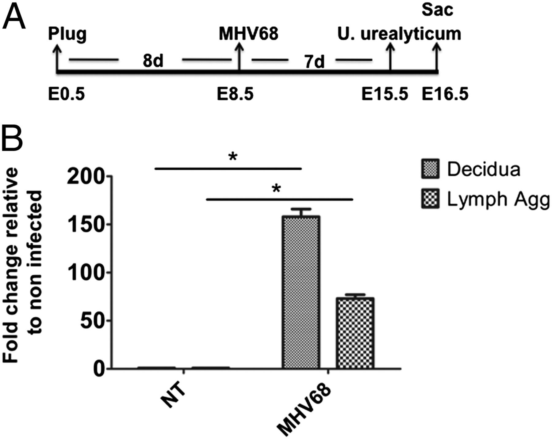 Viral Infection Of The Pregnant Cervix Predisposes To Ascending