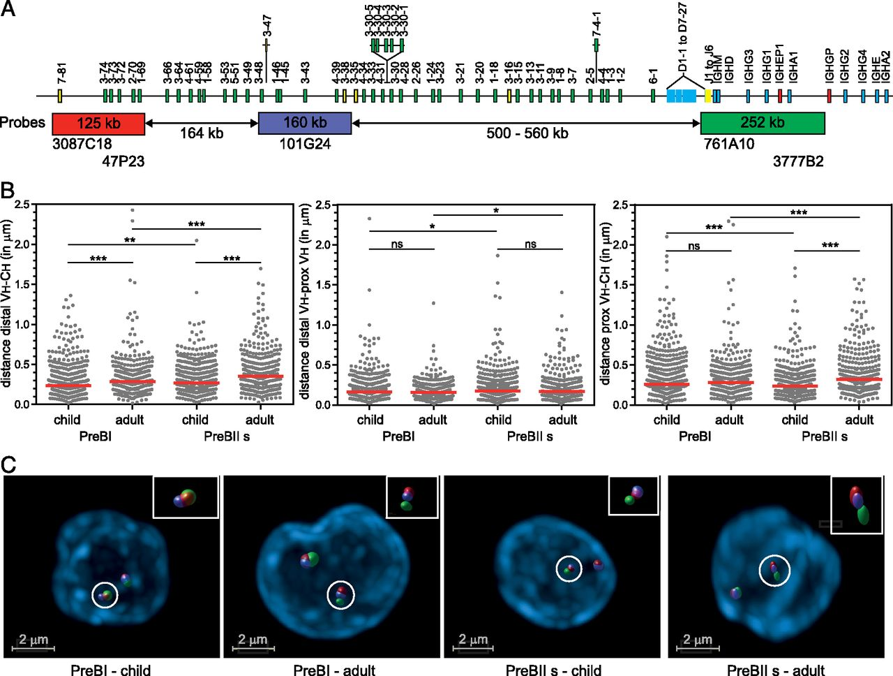 Increased Id2 Levels In Adult Precursor B Cells As Compared With Cooper Wiring Diagrams Mini Diagram Jensen Download Figure