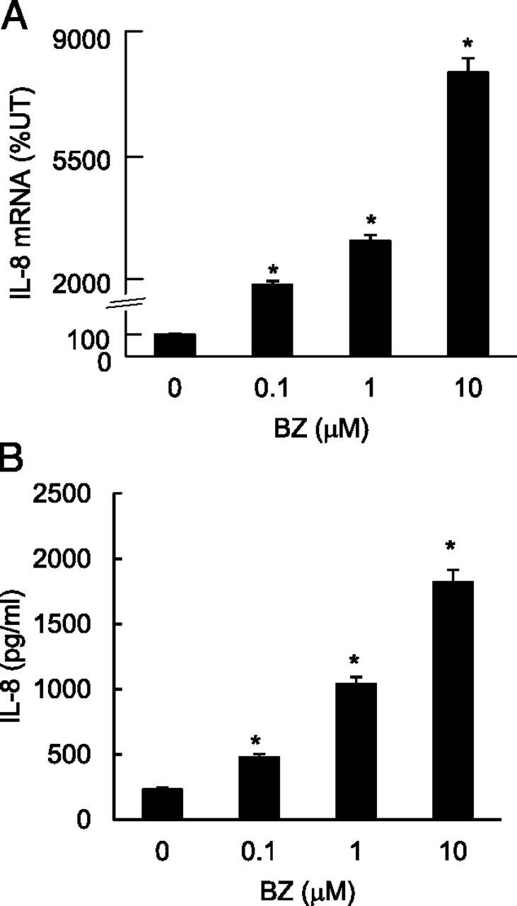 Proteasome Inhibition By Bortezomib Increases IL 8 Expression In
