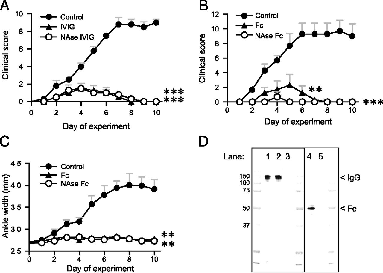 Therapeutic Effect of IVIG on Inflammatory Arthritis in Mice