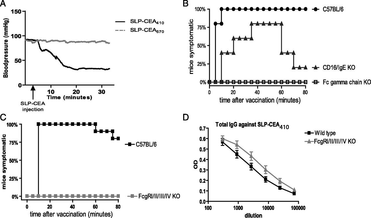 Igg Mediated Anaphylaxis To A Synthetic Long Peptide Vaccine