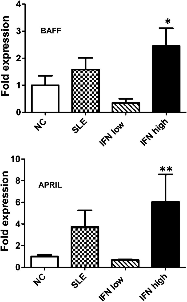 Neutrophil-Mediated IFN Activation in the Bone Marrow Alters