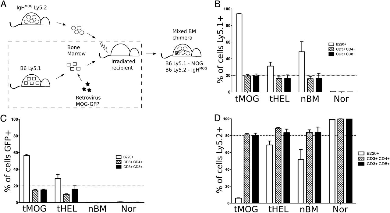 Gene Therapy Delivery of Myelin Oligodendrocyte Glycoprotein