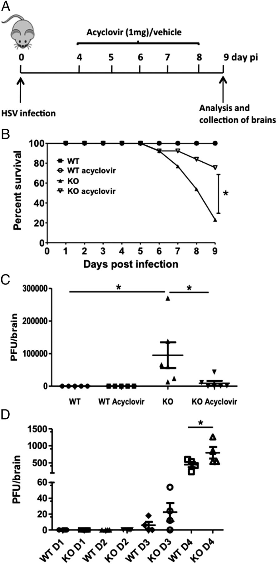 Critical Role of MicroRNA-155 in Herpes Simplex Encephalitis
