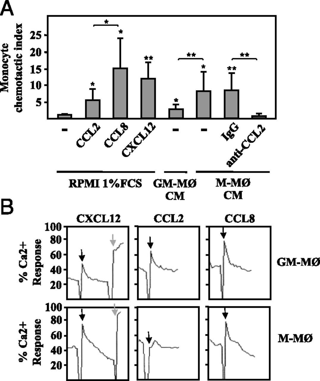 CCL2 Shapes Macrophage Polarization by GM-CSF and M-CSF