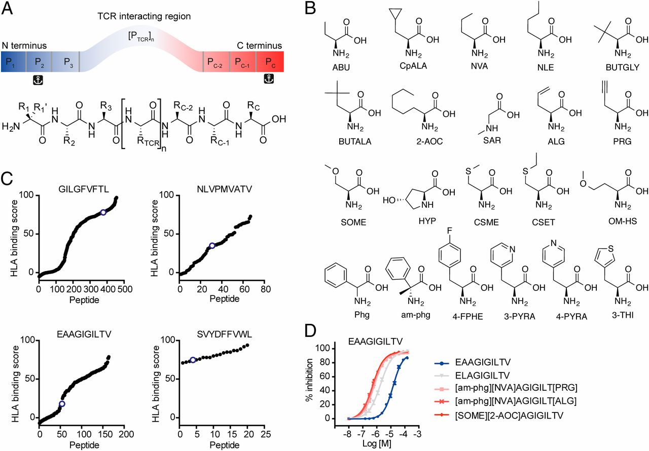 Altered Peptide Ligands Revisited Vaccine Design Through Chemically Amino 2000 150 Tabs Download Figure Open In New Tab