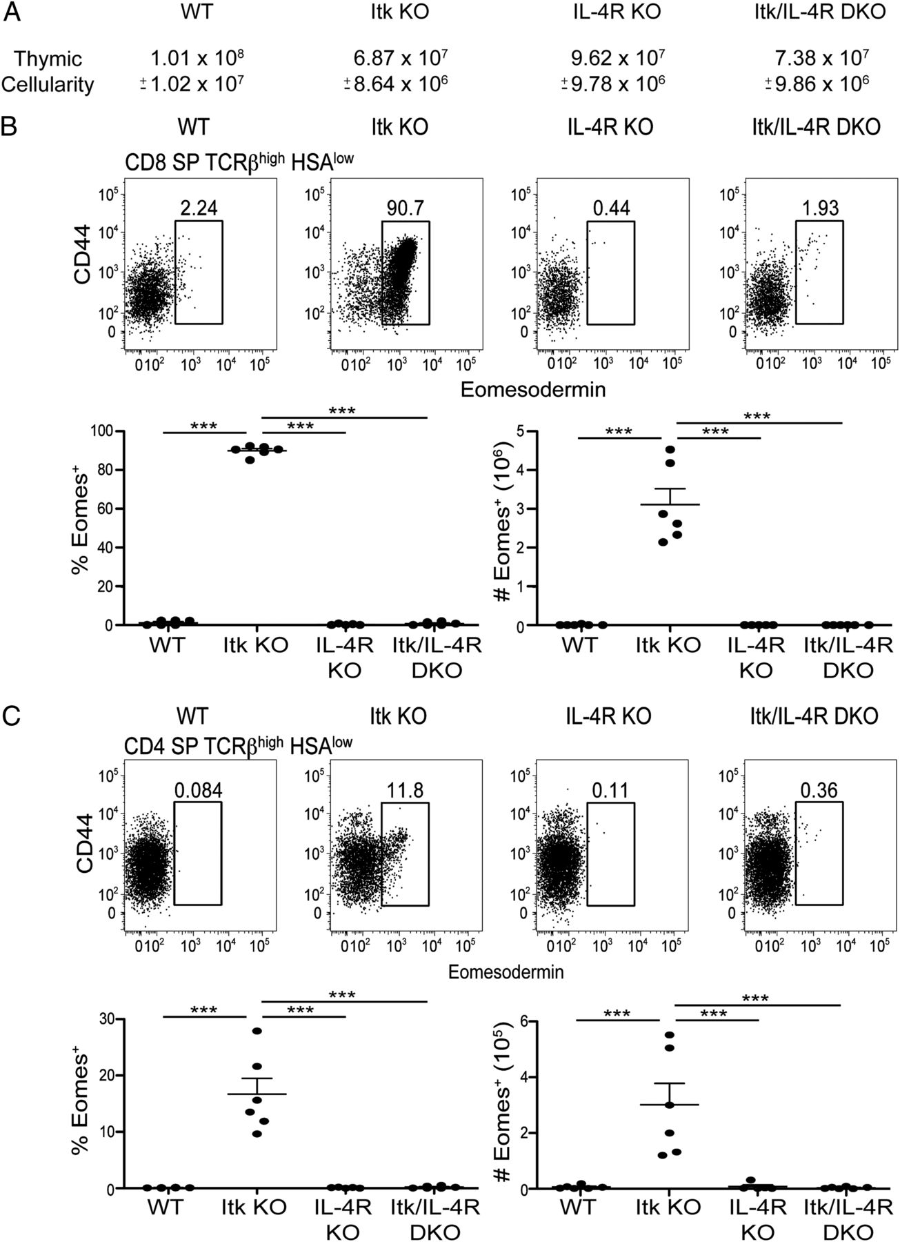 development of innate cd4 and cd8 t cells in itk deficient mice