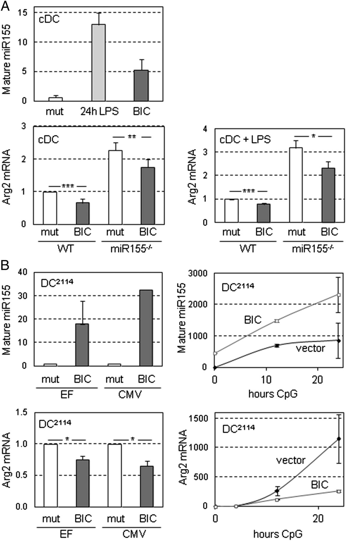 repression of arginase 2 expression in dendritic cells by microrna