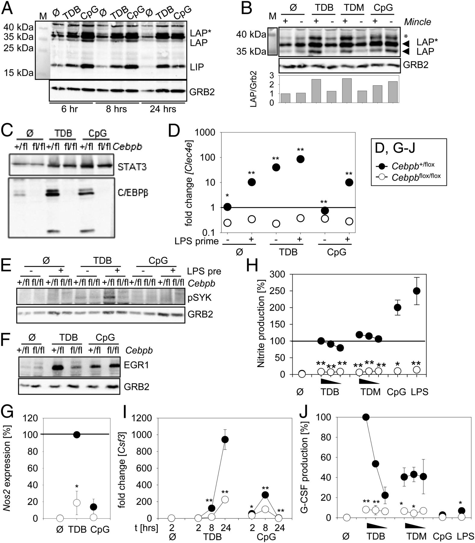 differential control of mincle dependent cord factor recognition figure