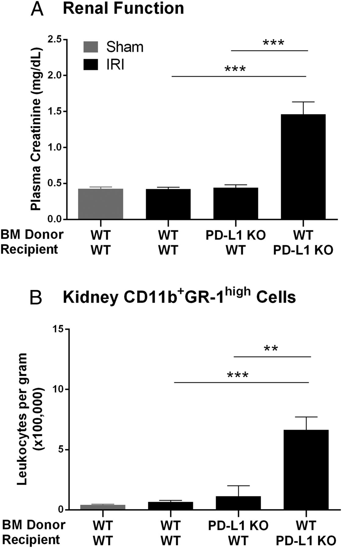 Both PD-1 Ligands Protect the Kidney from Ischemia