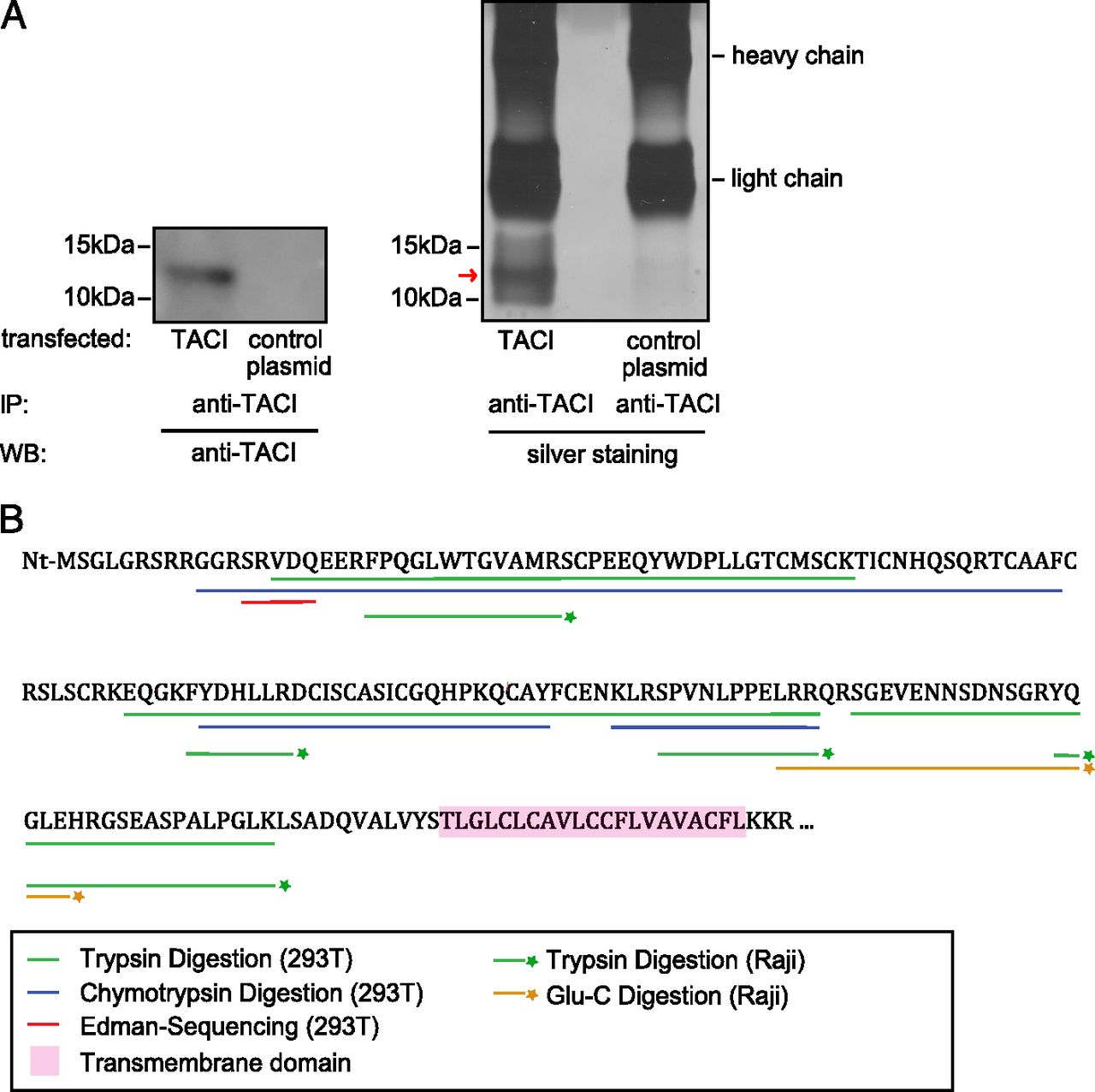 The Immunoregulator Soluble TACI Is Released by ADAM10 and