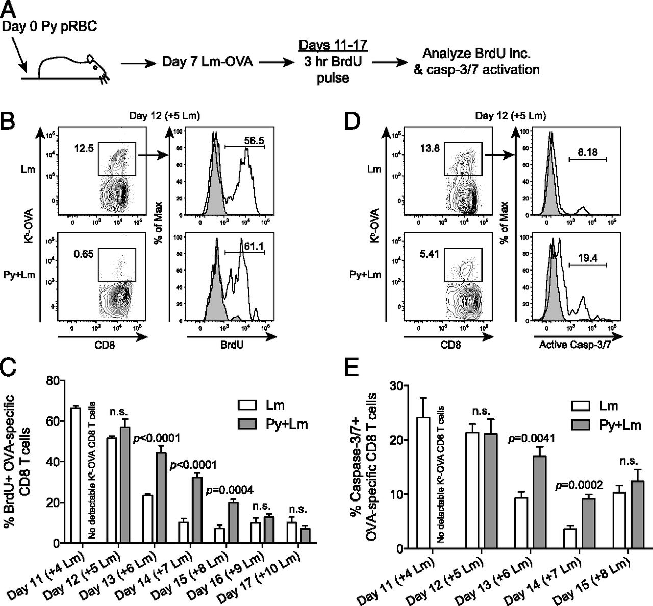 Plasmodium Suppresses Expansion Of T Cell Responses To Heterologous Lm 317 Related Keywords Suggestions Long Tail Download Figure