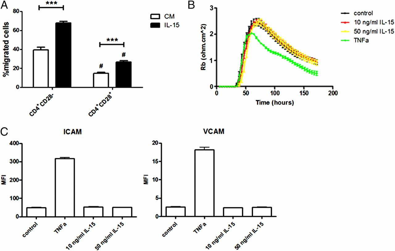 IL-15 Amplifies the Pathogenic Properties of CD4+CD28− T