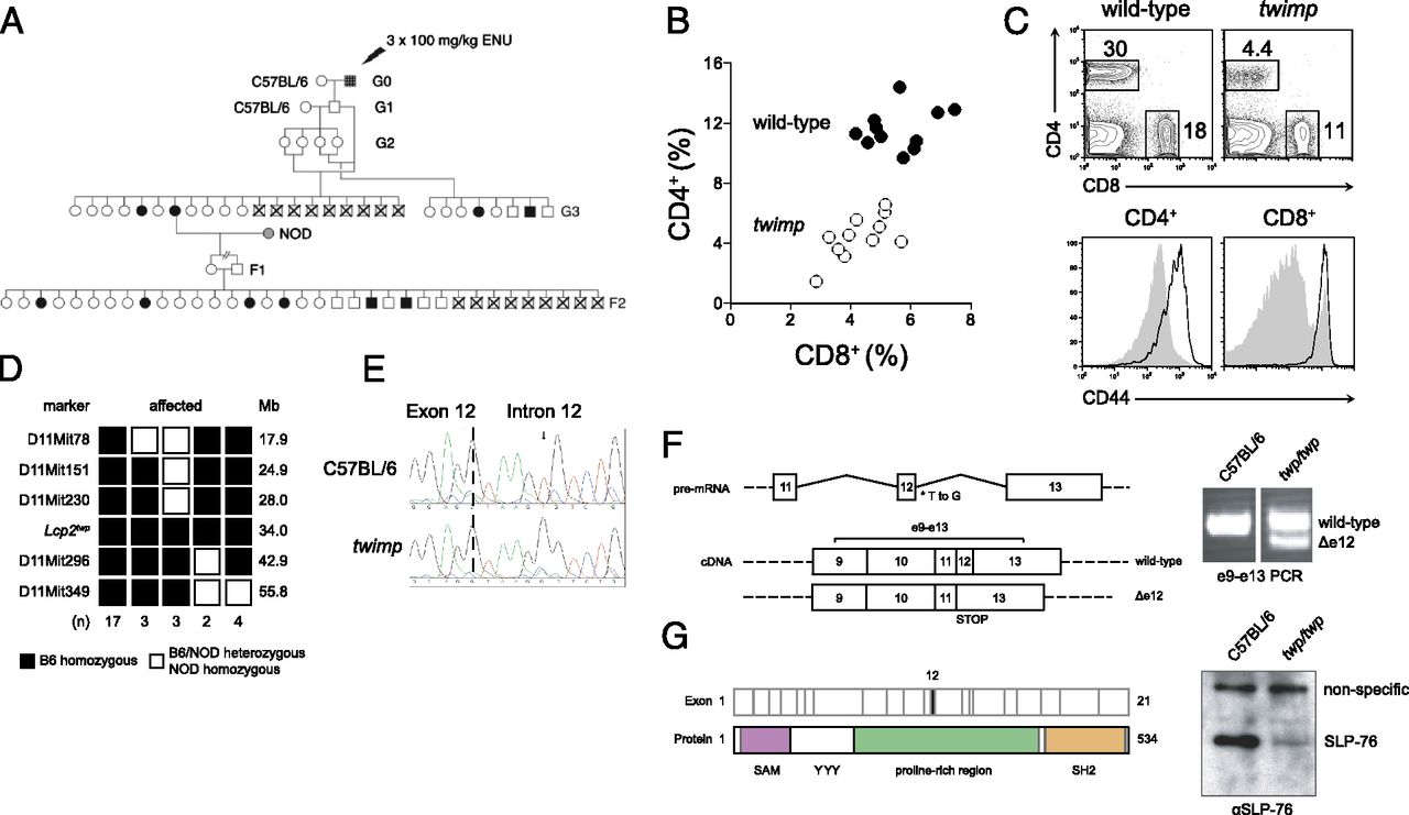Quantitative Reduction Of The Tcr Adapter Protein Slp 76 Unbalances Spring Buffer Type F 2 Download Figure