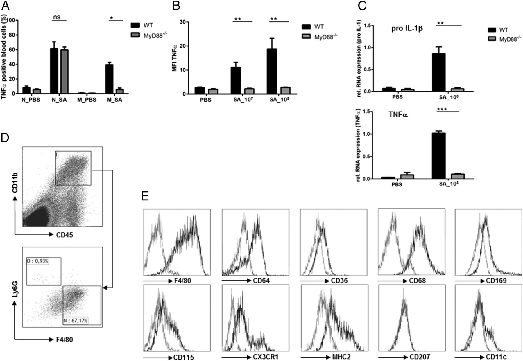MyD88 in Macrophages Is Critical for Abscess Resolution in