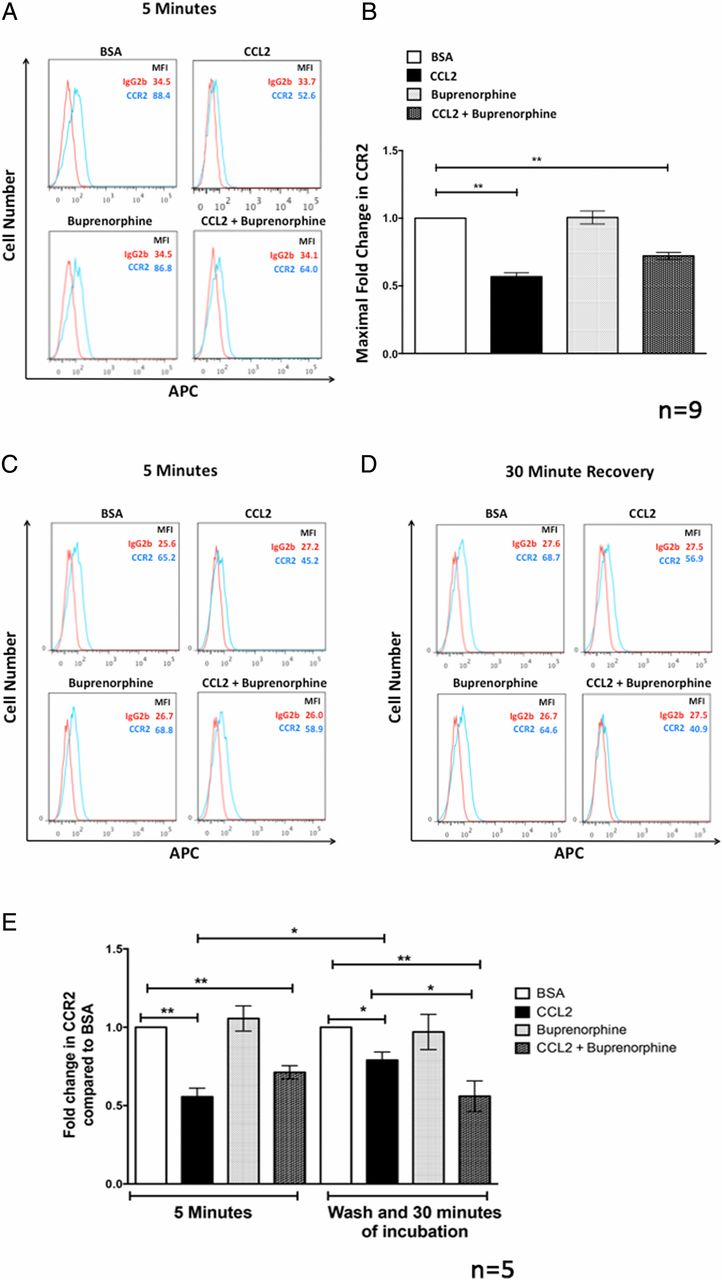 Buprenorphine Decreases the CCL2-Mediated Chemotactic