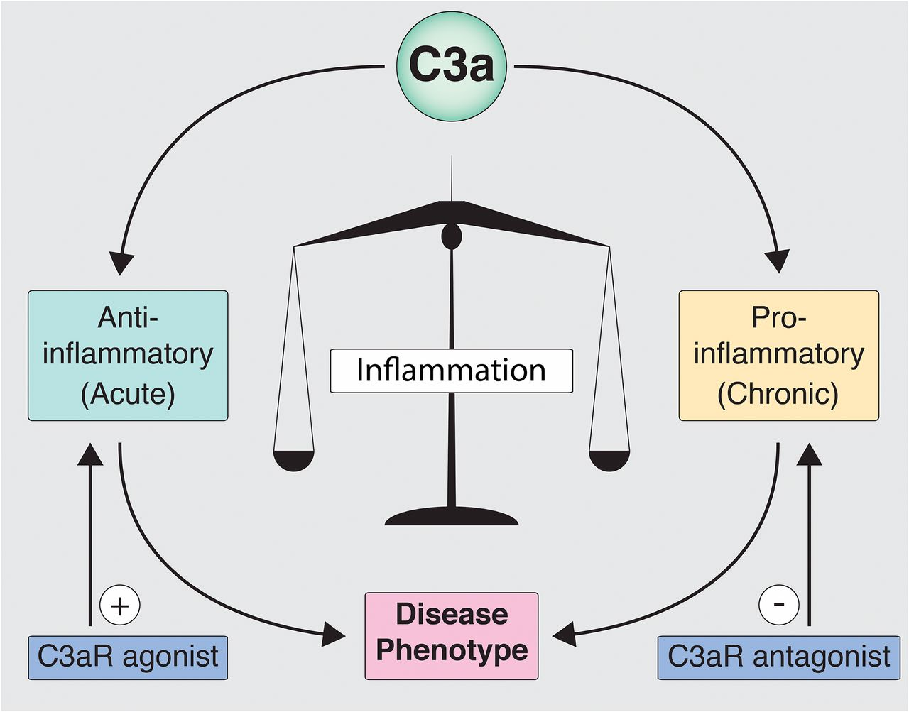 Is The Complement Activation Product C3a A Proinflammatory