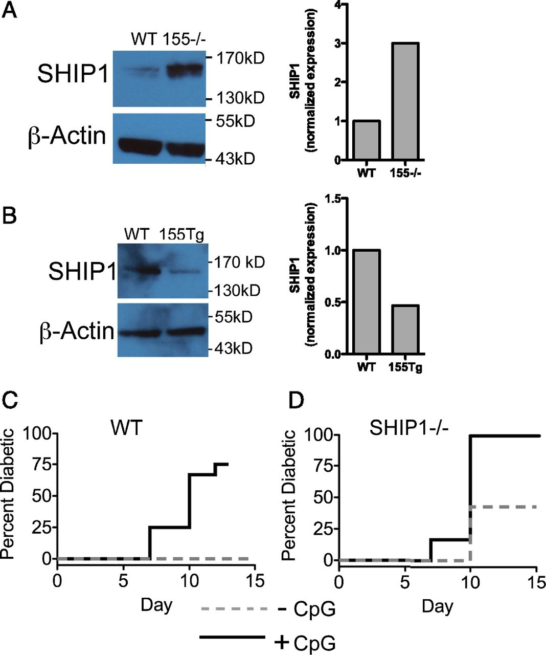 miR-155 Upregulation in Dendritic Cells Is Sufficient To Break