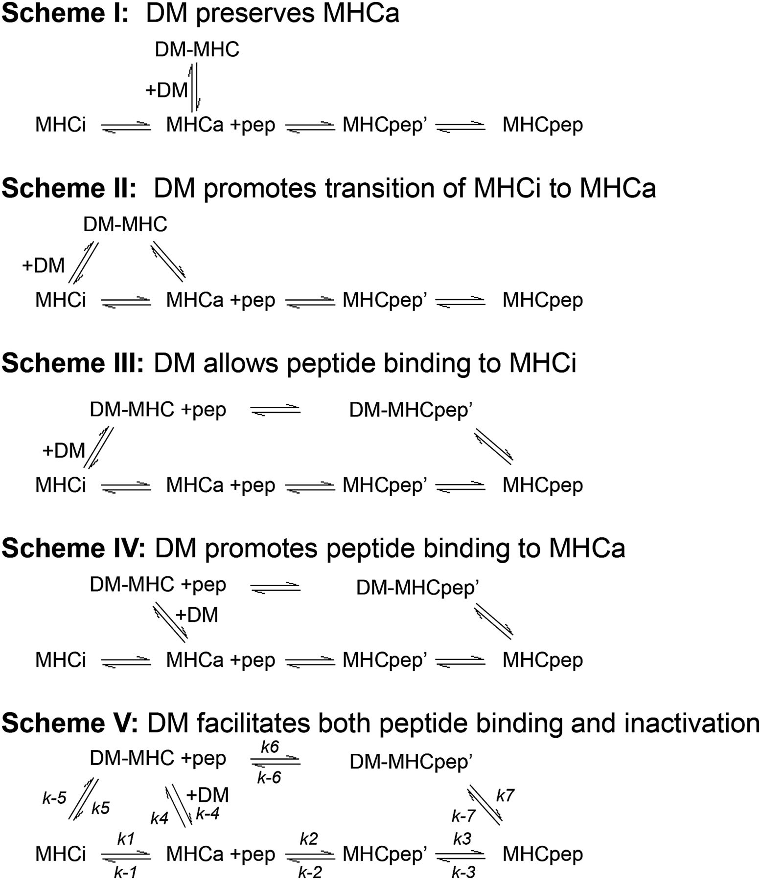 Evaluating the role of hla dm in mhc class iipeptide association download figure hexwebz Image collections