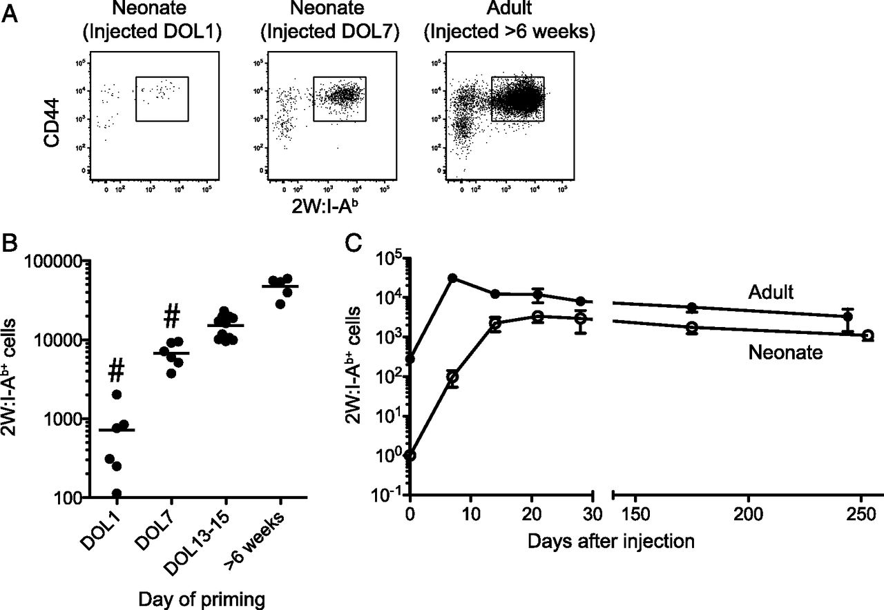 The neonatal cd4 t cell response to a single epitope varies in download figure ccuart Images
